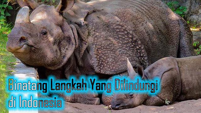 Binatang Langkah Yang Dilindungi di Indonesia
